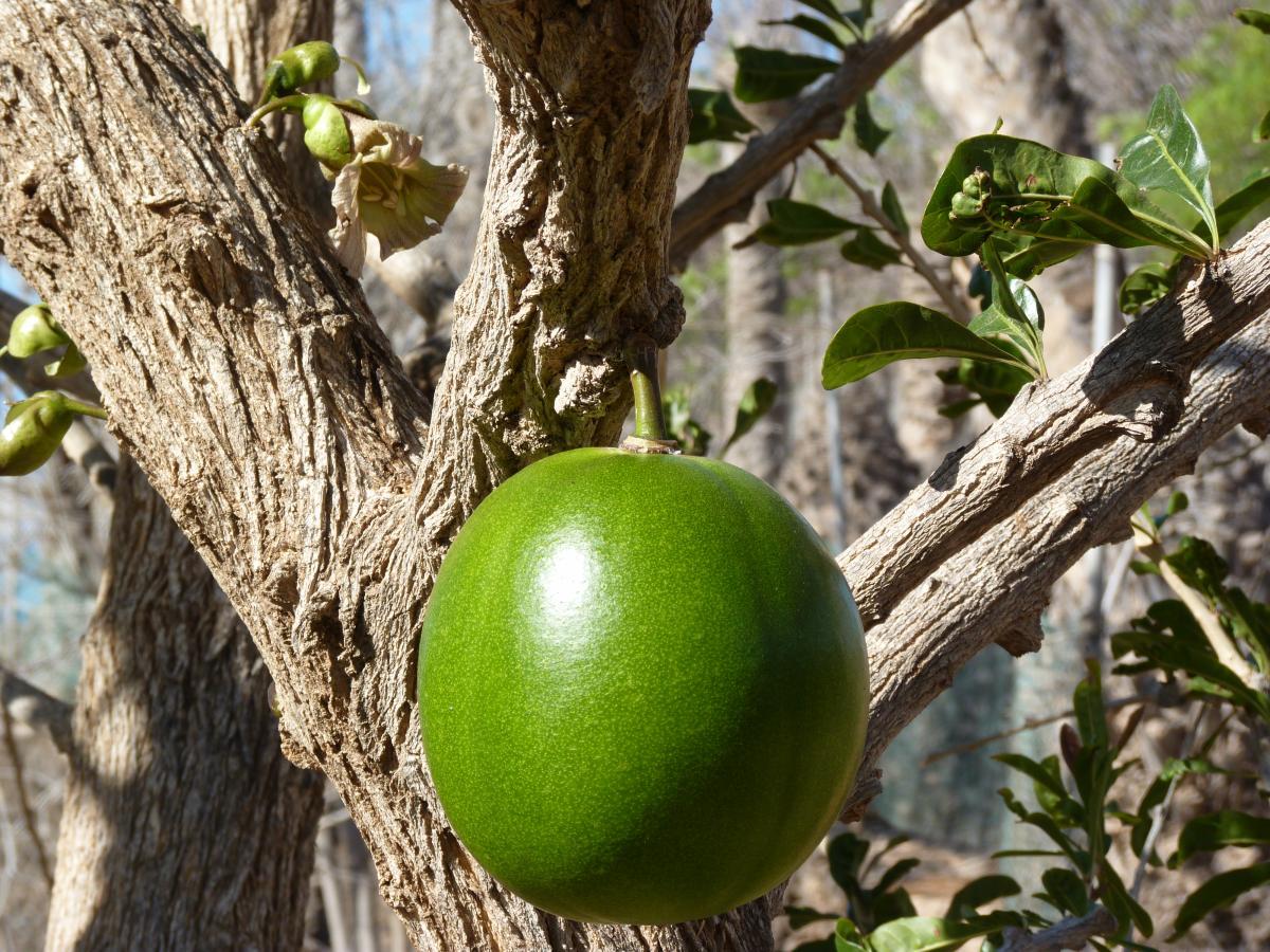 Galer a de plantas tropicales y subtropicales jard n for Plantas tropicales de exterior