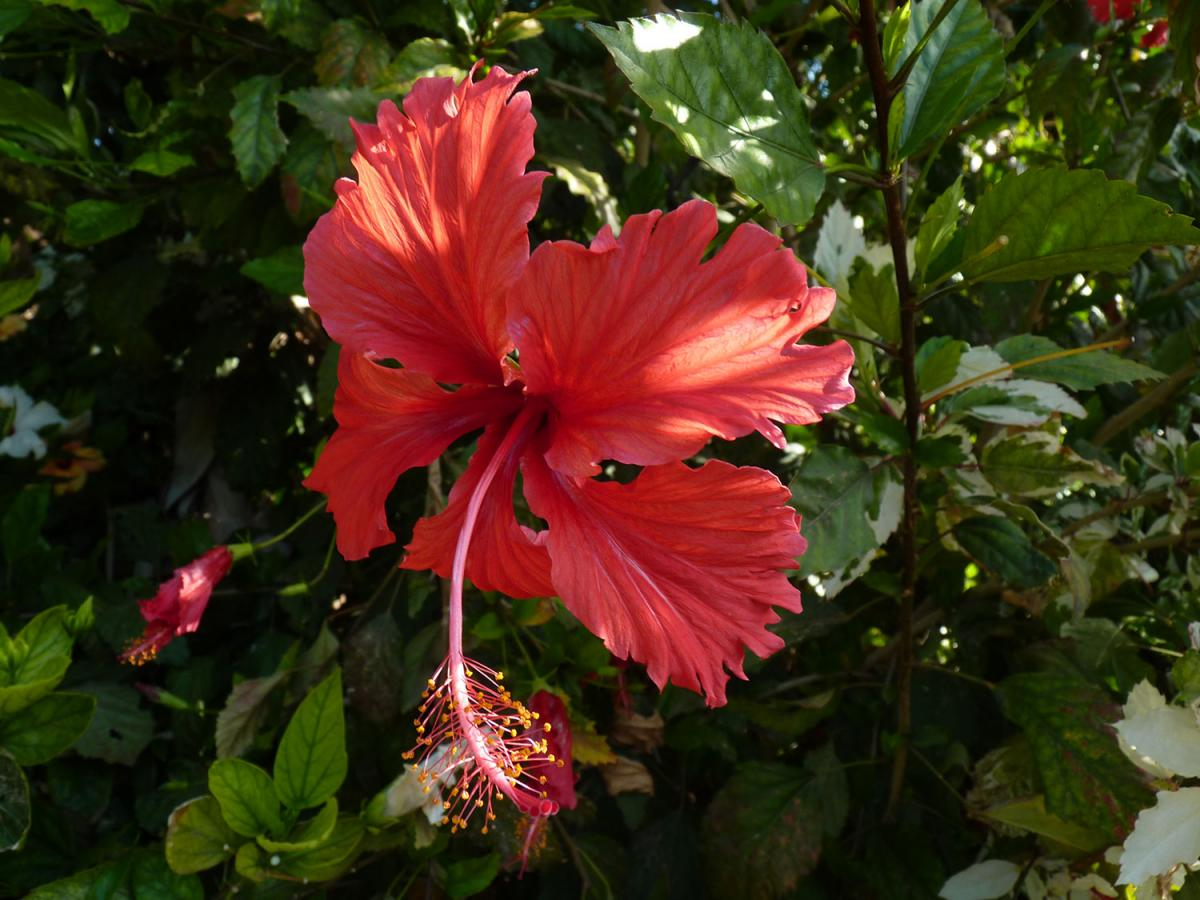 Galer a de plantas tropicales y subtropicales jard n - Plantas tropicales de exterior ...
