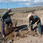 Plantando en la reserva