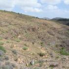Reserva Plantas Autóctonas vista general