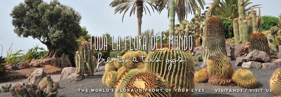 Neueste Nachrichten | Jardín botánico Fuerteventura